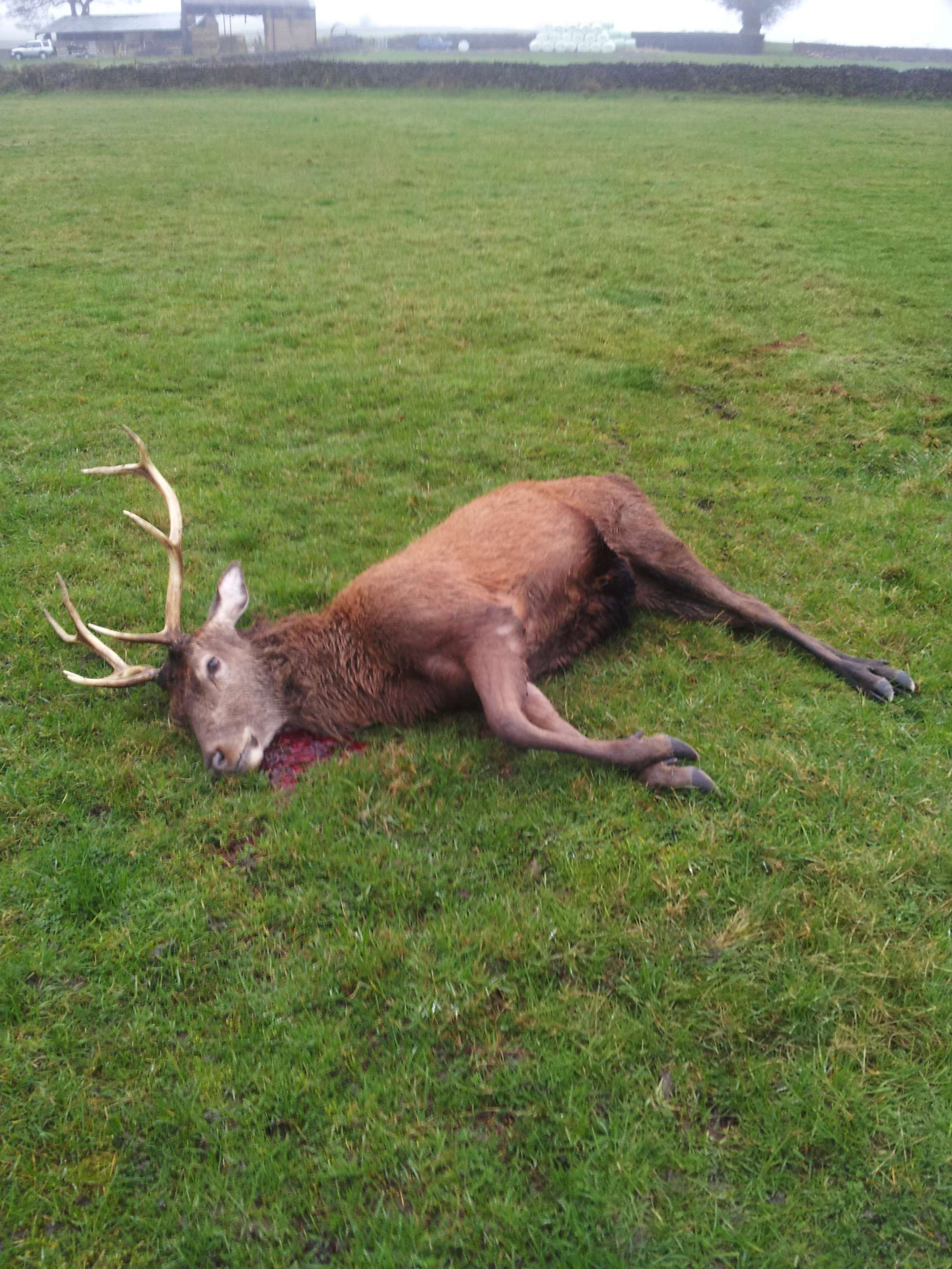 Deer Stalking Area or Rough shooting area - Isle-of-Sky Scotland
