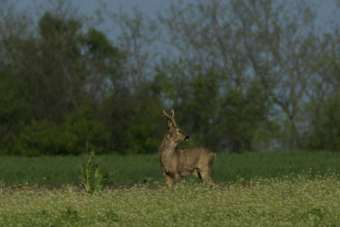 Deer Stalking Area  - Herefordshire at Yeld Hill near Kington