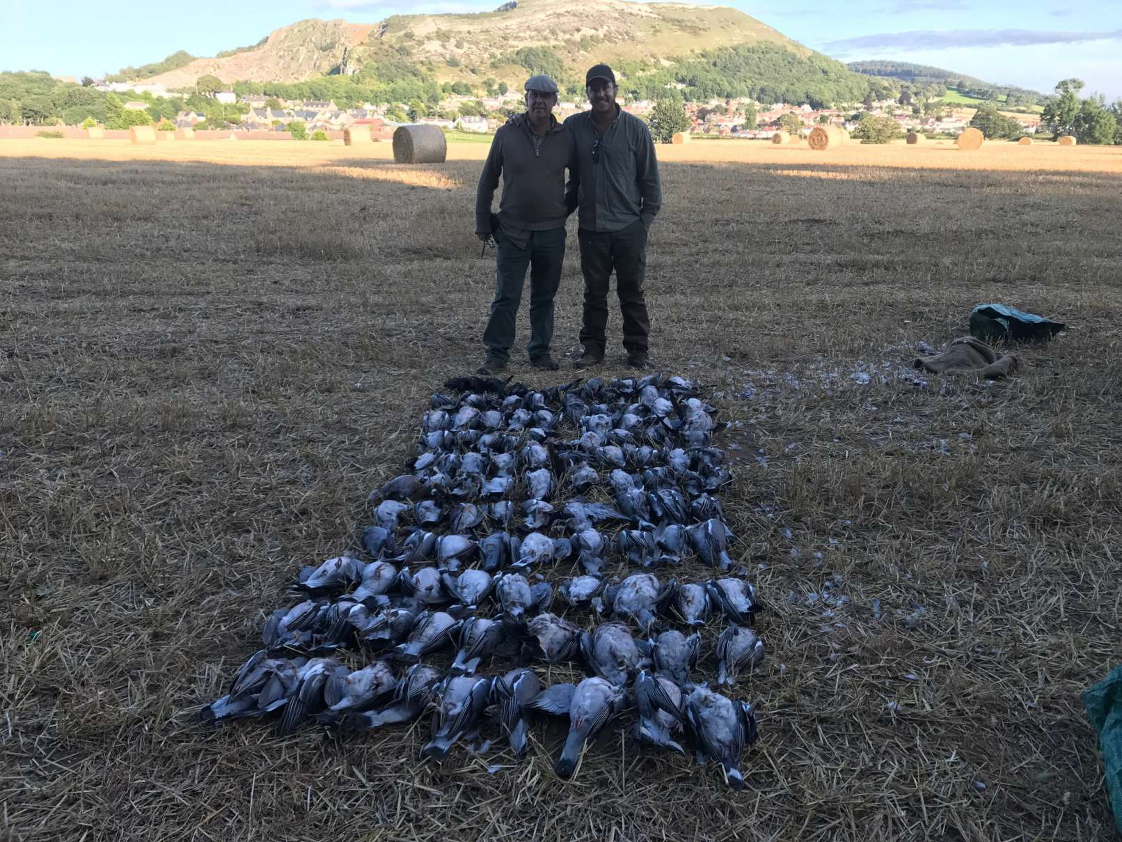 Pigeon shooting /vermin only - Prestatyn North Wales