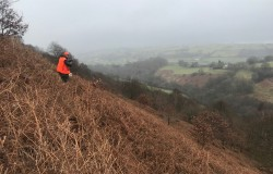 New block picture 1 upper river Clwyd valley we have the woodlands in the valley for 3 miles left and right plus another full days hunting on another large woodland and gorse bank block 1/2 mile away at the top of the river
