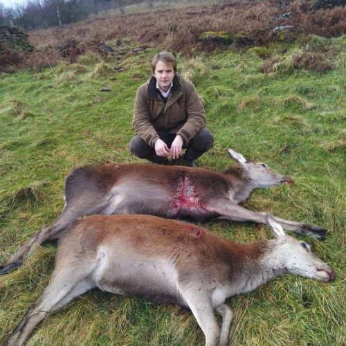 2 cull hinds