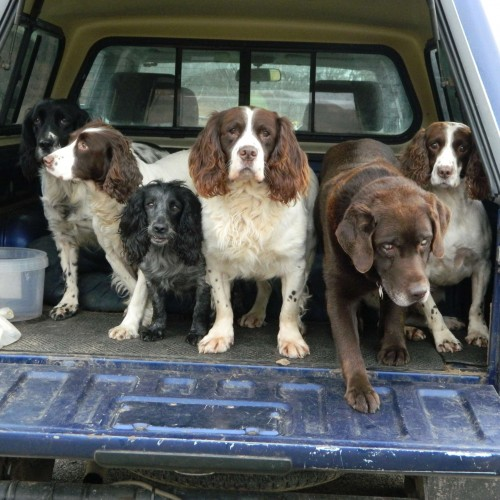 Bob Glynn Dogs sadly  Jack the lab (17) is dead as are katie, (4) in accident and Teal the big springer (16) they gave many good years to me